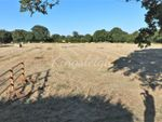Thumbnail for sale in Bures Road, West Bergholt, Colchester, Essex