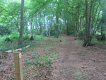 Thumbnail for sale in Brickhouse Wood, Doddinghurst Road, Brentwood, Essex