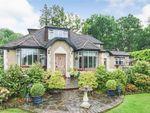 Thumbnail for sale in The Brackens, Hollow Lane, Dormansland, Surrey