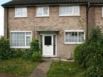 Thumbnail to rent in Tulip Walk, Colchester, Essex