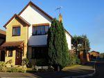 Thumbnail to rent in Alder Close, Sandford, Wareham