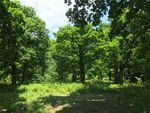 Thumbnail for sale in Park Wood, Hellingly