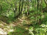 Thumbnail for sale in Walker Brow, Whaley Bridge