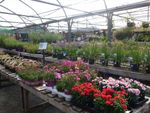 Thumbnail for sale in Garden Centre & Horticulture LS18, Horsforth, West Yorkshire