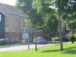 Thumbnail to rent in Plomer Avenue, Hoddesdon, Hertfordshire