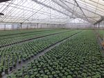 Thumbnail for sale in Kingsway Nursery, Corston, Malmesbury, Wiltshire