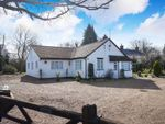 Thumbnail for sale in Yarmouth Road, Broome, Bungay
