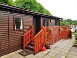 Thumbnail to rent in Ivyhouse Lane, Hastings