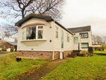 Thumbnail to rent in Nepgill, Bridgefoot, Workington