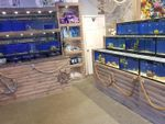 Thumbnail for sale in Pets, Supplies & Services BD6, West Yorkshire