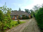 Thumbnail to rent in Battle Road, Hailsham