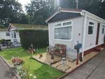 Thumbnail to rent in Wood Green, Mowbreck Park, Wesham