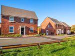 "Thumbnail to rent in ""Hadley"" at Shipton Road, Skelton, York"