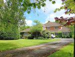 Thumbnail for sale in Grosvenor Road, Soldridge, Medstead, Hampshire
