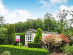 Thumbnail to rent in Beech Park, Chesham Road, Wigginton