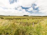 Thumbnail for sale in Land Near Haltwhistle, Northumberland