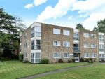 Thumbnail for sale in Warham Road, South Croydon