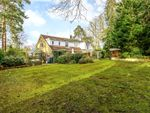 Thumbnail for sale in Macdonald Road, Lightwater, Surrey
