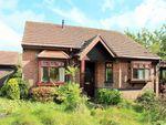 Thumbnail to rent in Clos Cynan, Killay, Swansea