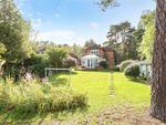 Thumbnail for sale in Bracken Lane, Blackmoor, Hampshire