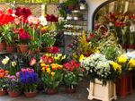 Thumbnail for sale in Florist HG1, North Yorkshire