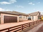 Thumbnail to rent in Cruickshank Park, Hillside, Montrose