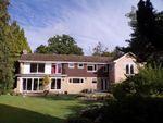 Thumbnail for sale in Ashley Heath, Ringwood, Dorset