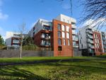 Thumbnail to rent in Annadale Crescent, Belfast