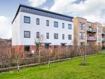 Thumbnail to rent in Buttercup Way, Waterlooville