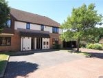 Thumbnail for sale in Oldfield View, Hartley Wintney, Hook