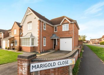 Thumbnail 4 bed detached house to rent in Marigold Close, Stamford, Lincs