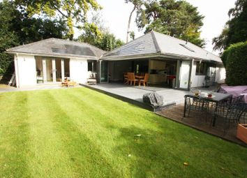 Thumbnail 4 bed bungalow to rent in Hurst Way, Pyrford, Surrey