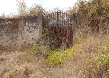 Thumbnail Farm for sale in Miranda Do Corvo, Miranda Do Corvo (Parish), Miranda Do Corvo, Coimbra, Central Portugal