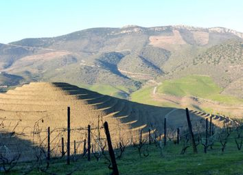 Thumbnail Farm for sale in P622, Olive Grove With A House In Upper Douro, Portugal