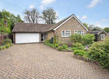 Thumbnail 4 bed detached bungalow for sale in Limes Close, Bramshott, Liphook