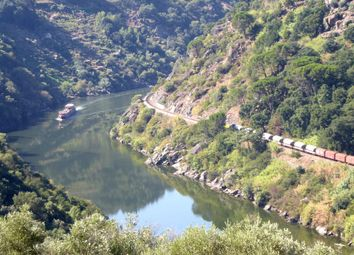 Thumbnail Land for sale in P801, Pre-Resort 10Ha Close To The Douro River. Portugal, North, Douro, Portugal