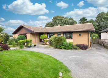 Thumbnail 4 bed detached bungalow to rent in Burnt Stones Drive, Sheffield