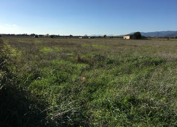 Thumbnail Land for sale in 07350, Binissalem, Spain