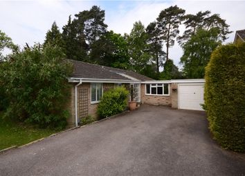 Thumbnail 4 bed bungalow for sale in Copped Hall Drive, Camberley, Surrey