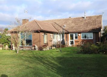 Thumbnail 4 bed detached bungalow for sale in Croomshill, Linton, Ross-On-Wye