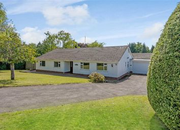 Thumbnail 5 bedroom bungalow for sale in Court House Road, Chepstow, Monmouthshire