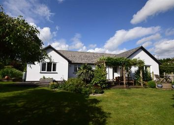Thumbnail 4 bed detached bungalow for sale in Maesgwyntog, Penegoes, Machynlleth, Powys