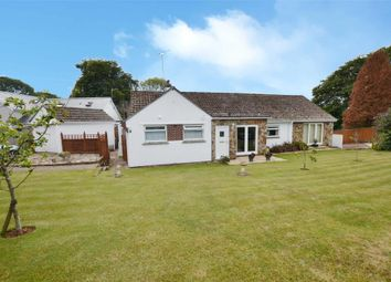 Thumbnail 6 bed detached bungalow for sale in Orchard Close, Galmpton, Brixham, Devon