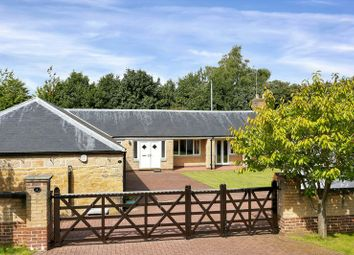 Thumbnail 3 bed bungalow for sale in Berry Hill Mews, Mansfield