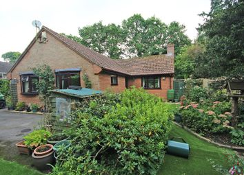 Thumbnail 3 bed detached bungalow for sale in Sway Road, Bashley, New Milton