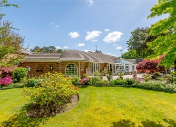 Thumbnail 3 bedroom bungalow for sale in Hurstwood, Ascot, Berkshire