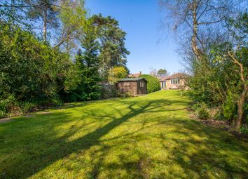 Thumbnail 4 bedroom bungalow for sale in Blackmoor Wood, Ascot