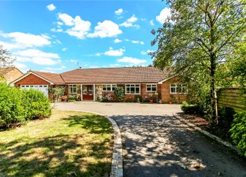 Thumbnail 5 bed detached bungalow for sale in Three Stiles Road, Farnham, Surrey