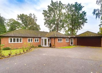 Thumbnail 4 bed bungalow for sale in Windrush Heights, Sandhurst, Berkshire