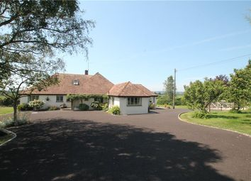 Thumbnail 3 bed detached bungalow for sale in Common Lane, Marnhull, Sturminster Newton